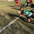 Rugby Corato perde sul campo del Potenza