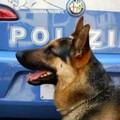 """Servizio antidroga della Polizia all'IPC  """"Tandoi """""""