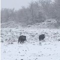 Neve e disagi nelle campagne, in azione i volontari ma la situazione è critica. VIDEO
