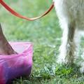 Deiezioni canine, è guerra agli sporcaccioni. Pizzicati 24 proprietari incivili di cani