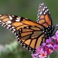 Alta Murgia: un Parco per api e farfalle