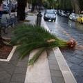 Cade un grosso ramo di una palma di Corso Mazzini