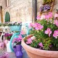 """""""Maggio in fiore """": decorazioni floreali, cultura e arte per i 40 anni della Fidapa di Corato"""
