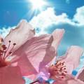 Parte la seconda edizione di Maggio in fiore con i colori della Murgia