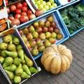 Coltivatori di frutta in crisi, «I prezzi di vendita non coprono i costi di produzione»