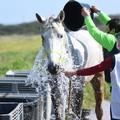 Fa tappa a Corato il Campionato regionale Endurance Equestre