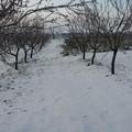 Colture danneggiate dal gelo, FI: «Il Comune vada incontro al mondo agricolo»