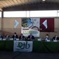 Olio d'oliva, «Valore aggiunto nell'aggregazione tra produttori»