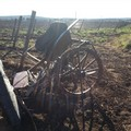 Cavallo imbizzarrito rovescia calesse, ferito il cocchiere
