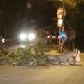 Il forte vento spezza un albero, disagi in via Castel del Monte