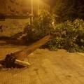 Ultim'ora: grosso albero si piega in Piazza Vittorio Emanuele