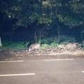 Frontale con un cinghiale e macchina in panne: la terribile domenica di due giovani