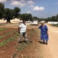 Agrididattica e orto dei nonni, la Puglia promuove l'agricoltura sociale