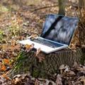 """Parte  """"Masserie 2.0 """", connettività wifi e servizi digitali nelle aree rurali"""