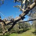 Danni in agricoltura, Mazzilli scrive al ministro Centinaio