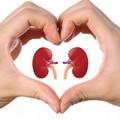 Prevenzione delle malattie renali, l'AVIS organizza screening gratuiti