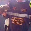 Le Guardie Ambientali d'Italia salvano una poiana