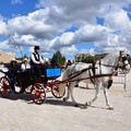 Con cavalli, carri e carrozze rievocando la vendemmia