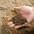 Emergenza siccità, l'allarme di Coldiretti: «Crollo della produzione di grano sino al 70%»