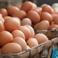 Tracce di fipronil in allevamento di galline, sequestro in azienda coratina