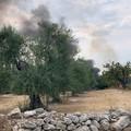 Fiamme in via Belvedere, a fuoco sterpaglie
