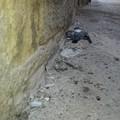 Animali morti, sporcizia e degrado: «Qui è impossibile vivere»
