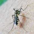 Troppe zanzare anche ad ottobre: quando la prossima disinfestazione?