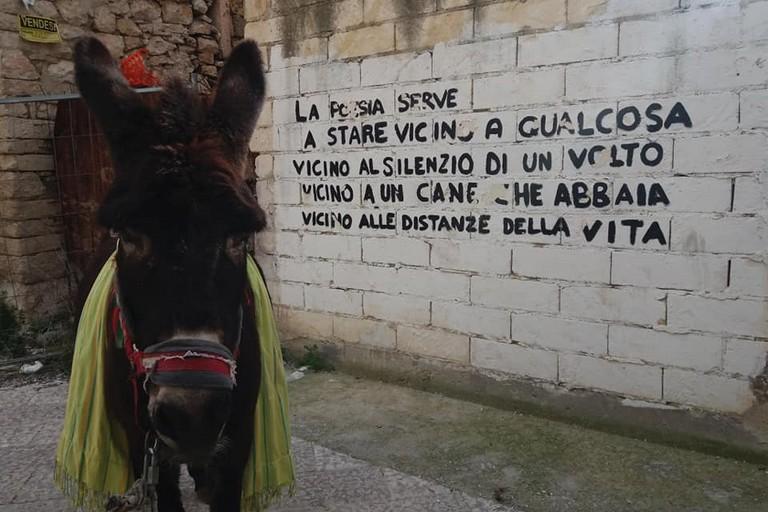 L'asina Salam. <span>Foto dal profilo Facebook di Bruno</span>