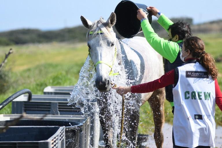 Gara Endurance Equestre