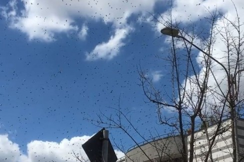 Sciame di api sull'extramurale
