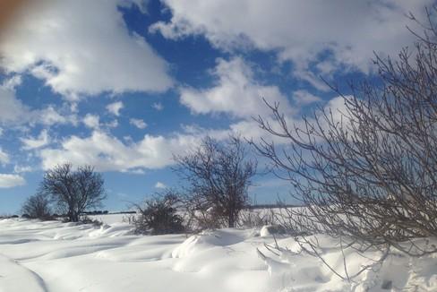 Emergenza neve, 8 gennaio 2017