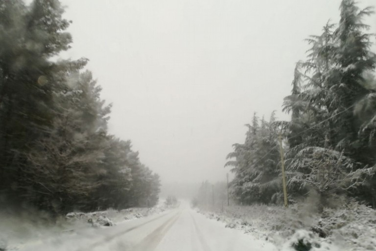 Neve murgia